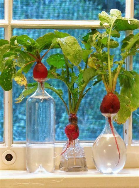 Best Windowsill Vegetables by 14 Indoor Windowsill Vegetables To Grow Plants