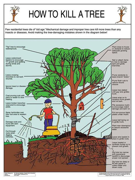 caring for trees how to kill a tree saving our trees marrickville municipality