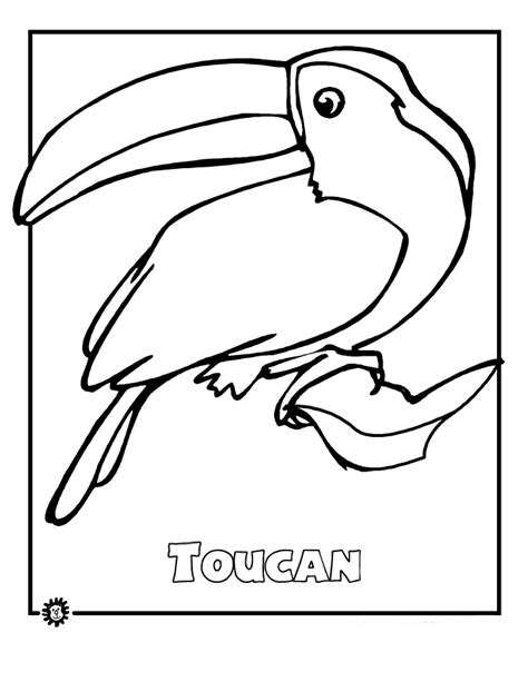 Rainforest Animals Coloring Pages by Rainforest Animals Coloring Pages 3 It S National Bird