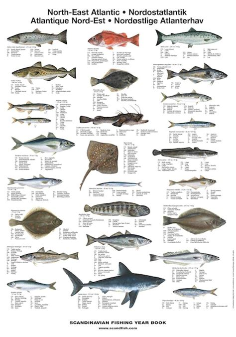 mediterranean sea fish la tene maps