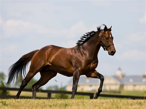 running horse brown horses wallpapers desktop background animals