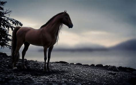 Horse Wallpapers 11 - 1920 X 1200
