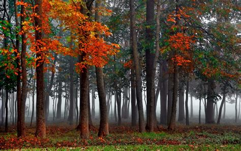 mist, Autumn, Forest Wallpapers HD / Desktop and Mobile ...
