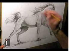 Arabian Horse Drawing YouTube