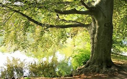 Tree Summer Lake Under Nature Landscape Resolution