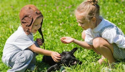 Septiņas ieteicamākās suņu šķirnes ģimenēm ar bērniem - DELFI