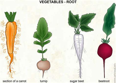 list of edible root mountain september 2012