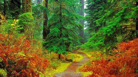 forest wallpapers desktop wallpapers