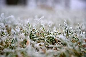 Frisch Gesäten Rasen Düngen : rasen d ngen im fr hling die erste d ngung des jahres plantura ~ Yasmunasinghe.com Haus und Dekorationen
