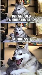 Bad Joke Husky Meme Blank Pictures to Pin on Pinterest ...