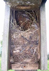 Nest, Egg, Young and Adult Photo Album - small cavity nesters