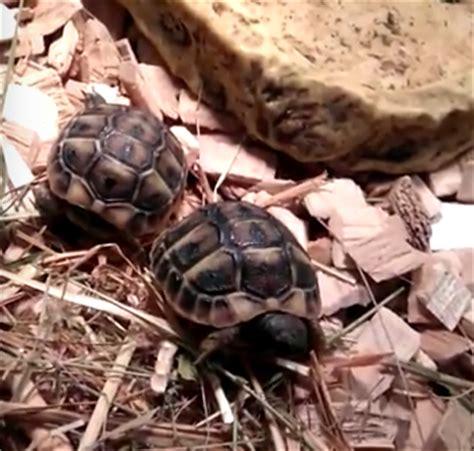 tortue de terre enclos vivarium et terrarium pour