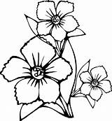 Coloring Flowers Flower Pages Printable Sheets Print Sheet Colour Simple Colring Toddler Drawing Adult Cute Activities sketch template