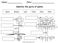 Label Parts Of A Flower Eyfs