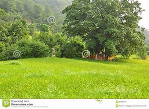 Small Hindu Temple Under A Tree In A Green Rice Paddy