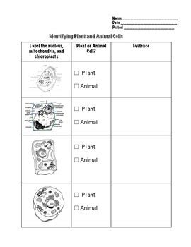 comparing plant and animal cells worksheet by geekology tpt