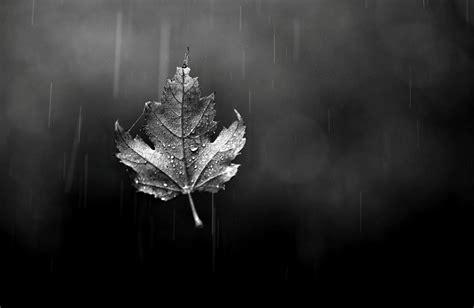 black rain wallpaper gallery