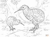 Kiwi Coloring Pages Spotted Bird Drawing Printable Supercoloring Ausmalbilder Zealand Animals Vogel Zum Ausmalen sketch template