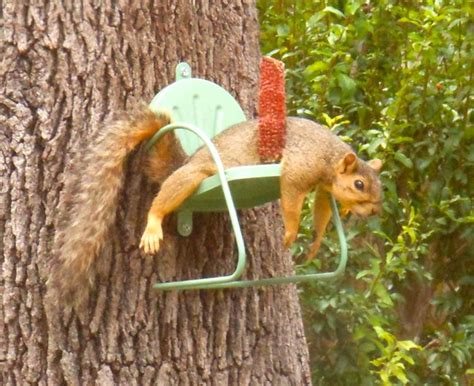 squirrel feeder lawn chair suellen prechtl of san antonio sent us this