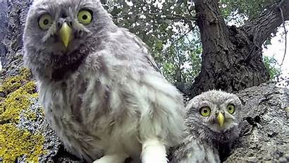 Animals Awesome Cameras Discovering Kind Unfamiliar Shot