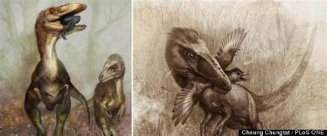 However in this article, we will discuss consumption of decaf coffee while pregnant. Dinosaur Fossils Show Last Meals In Fuzzy Dinos' Bellies