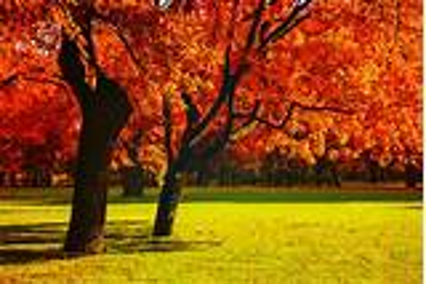 Halfway to Autumn - WHYY
