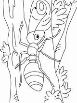 Coloring Pages Ant Printable Anthill Template Paul Templates Coloringme sketch template