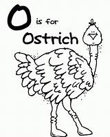 Coloring Ostrich Popular Clipart sketch template