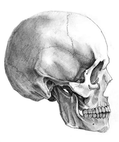 Skull Side View Alexandrosiii Deviantart