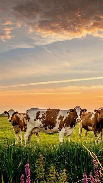 Farm Dairy Wallpapers Iphone