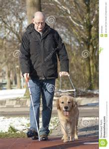 Guide Dog Helping Blind Man