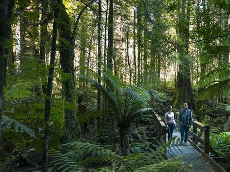 walking  hiking yarra valley  dandenong ranges