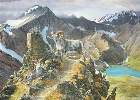 pinnacle bighorn ram limited edition print wild wings
