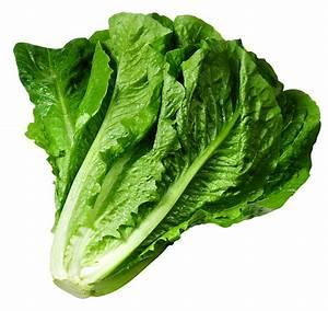 Lettuce clipart - Clipground