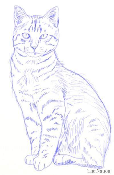 draw  realistic cat