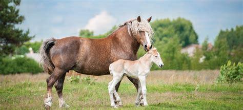 hafer kaufen pferd simple hafer  hafer kaufen pferd