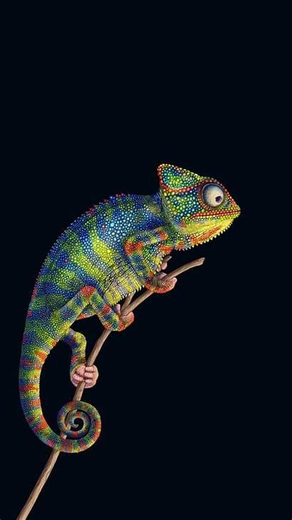 Chameleon Lta Animal Colorful Wonderful