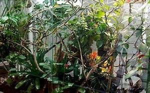 Pflanzen Für Terrarium : pflanzen im terrarium leopardpanther z chter von leopardgeckos und panthercham leons ~ Orissabook.com Haus und Dekorationen