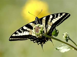 Wildlife  Butterfly Background Hd Wallpapers 2012