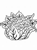 Cauliflower Coloring Pages Vegetables Colored Recommended Colors Zoli sketch template