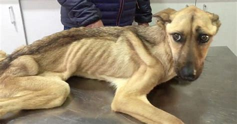 starving dog  couldnt stand    incredible