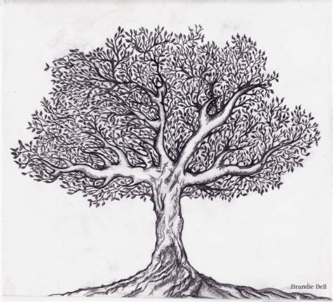 Tree Template Black And White by Tree Of Life Black And White Clipart Google Search