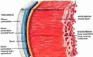 Cardiopulmonary  Exam 2  Flashcards