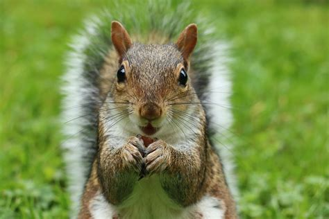 best food for squirrels daily family farms