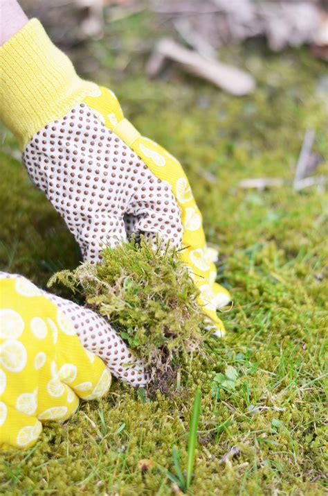gaertnern einen baumstamm mit blumen bepflanzen bonny