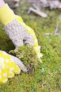 Garten Hügel Bepflanzen : g rtnern einen baumstamm mit blumen bepflanzen bonny und kleid ~ Indierocktalk.com Haus und Dekorationen