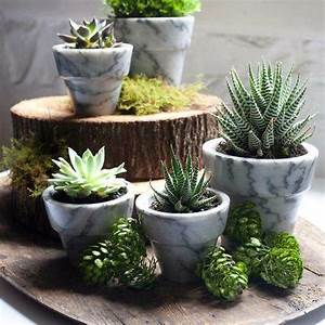 Potted Cactus Ideas | www.imgkid.com - The Image Kid Has It!