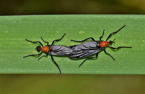 love bugs   insect