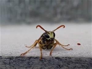 Was Tun Gegen Wespen Im Kirschlorbeer : was tun gegen wespen stichhaltige tipps kinderoutdoor ~ Lizthompson.info Haus und Dekorationen