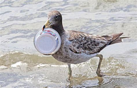 le si鑒e de l onu l onu lance une cagne mondiale pour lutter contre la pollution plastique